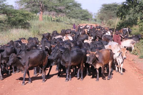 Tanzania May 2009 225